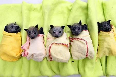 A bat! I've always wanted a bat!