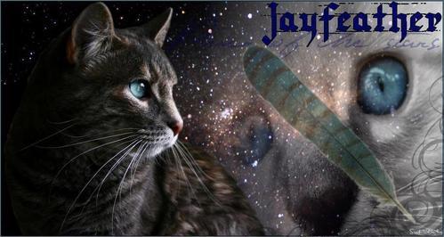 I love Jayfeather!