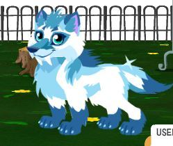 probably a lebih feminine version of that pic below... Name: Glacier tundra (like one of my OC's) Clan: Ice Status: Lone