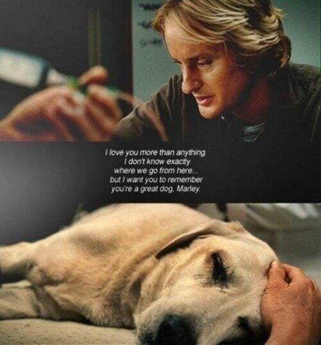 Marley & Me :(