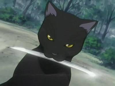 May - Cat :)