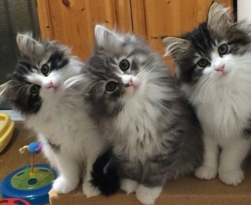 how about 3 cute kittens :)