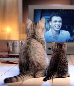 2 고양이 watching Matt on TV <3333333