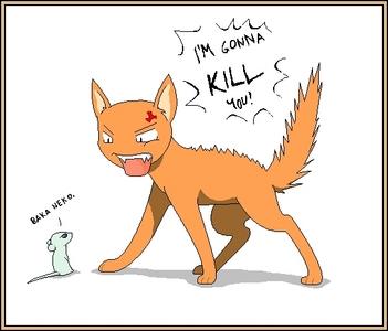 A cat and a rat~