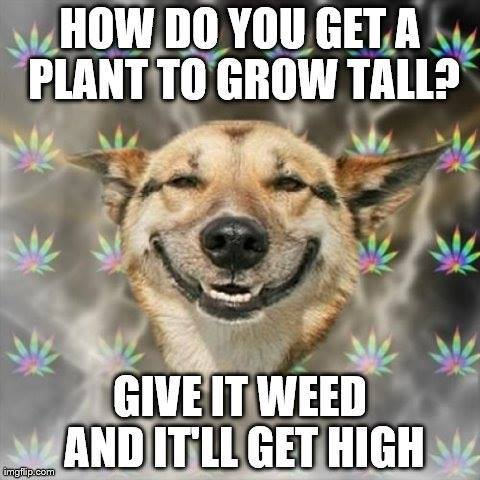 It will get high