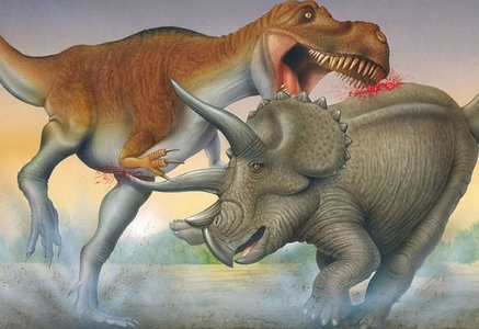 That depends on who has the highest advantage. T.Rex could win if it was aware on what was at stake. But Triceratops on the other hand does contain a lot of full power including its massive frill, three horns, and reputation.