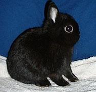 A cute little bunny :D