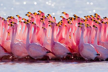 Flamingos!!!! ^^
