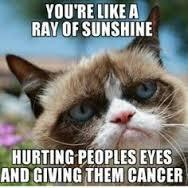grumpy cat totally