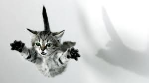 """Than if that is true than last time someone told me """"You cant fly!!!"""" On here put now. I'm going to prove it!!!! *jumps off a cliff* Bad idea :P!!!!"""