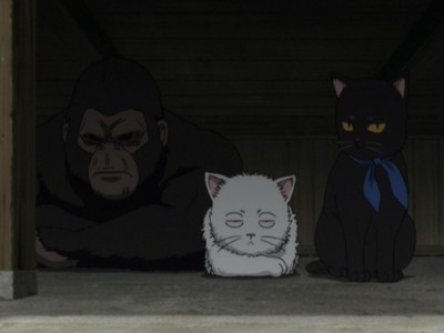 At one point in the series Gintoki, Zura and Kondo turned into cats... Kondo a gorilla XD