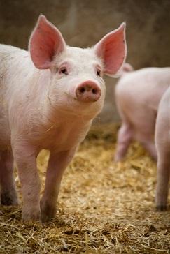 Never! I am a vegetarian. And I upendo animals.