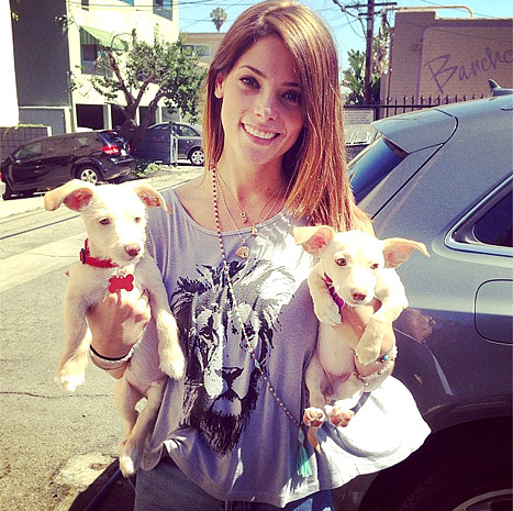 a cute pic of Ashley with her 2 new dogs<3