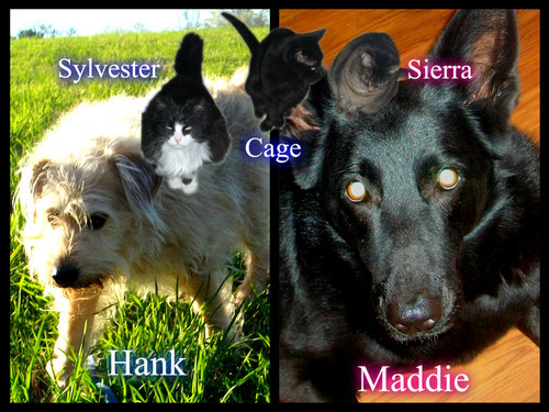 I have 2 dogs, a German Shepherd, Maddie and a terrier mix, Hank. I also have 3 cats, Sierra, Cage and Sylvester and fish.