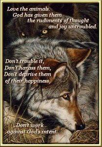 Because... lobos are amazing.