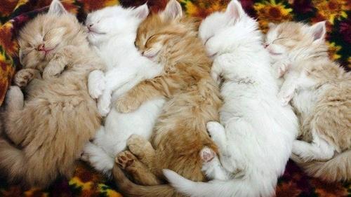 Cuddling mga kuting