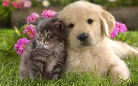 I love all animals,but I have a weakness for cute puppies and kittens,like in this picture