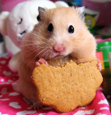 ♥hamster♥ I had two of them and I really miss them♥♥