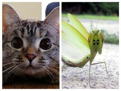 Cat And Praying Mantis.