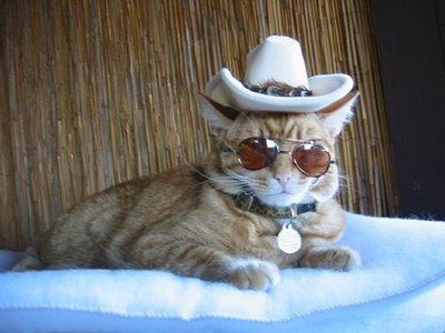 A badass Cowboy kitty :D