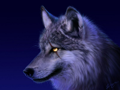 The lobo