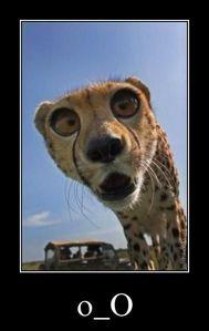 C - Cheetah h - hungry >:O e - eager e - entertained t - tall a - annoying h - happy G - Girl i - ice eater.. r - ready L - Licks (Okay, CHEETAH INSTINCT, OKAY?)