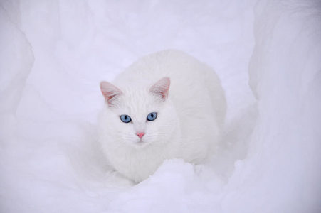white cat in the snow:)