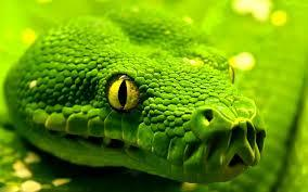 Green is not a creative colour! :)...snakes...