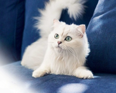 White Kucing go with me too <3