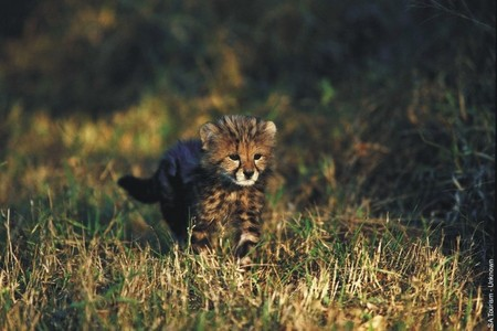 sometimes Чтение the same last name squirrels блины no one of my fave Животные in the world,a cheetah<3
