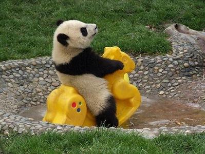 a cute panda cub playing on a rocking horse<3