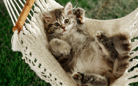 just waking up from a catnap in a hammock:)