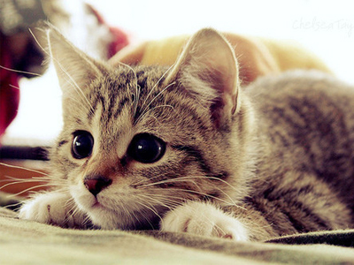 I Любовь Кошки