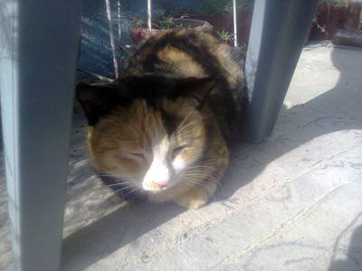 My cat Mystery. :) http://images6.fanpop.com/image/user_images/5535000/luckyPink-5535442_650_488.jpg