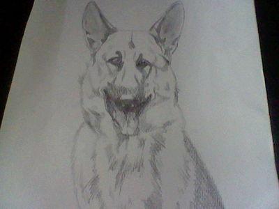 My German Shepherd drawing <3