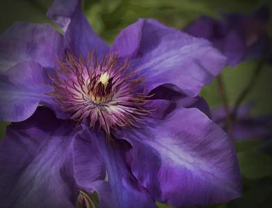 The color royal Purple.