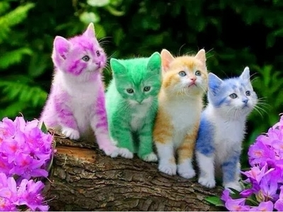This pic is my personal fave!! They're so cute!!! I <3 kittens!!