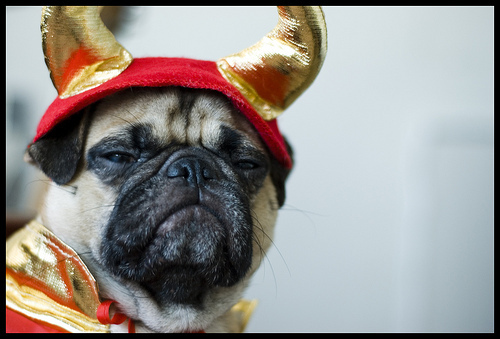 Total dork omg ;3 Very 666 Such 999 HUEHUEHUE I need sleep, wewe say? As wewe command, Commander of things and stealer of souls. Fear has been revelled in. Sanity is no more. I have been waiting for the chance to post devil pug. I thank wewe for the opportunity. G'night.