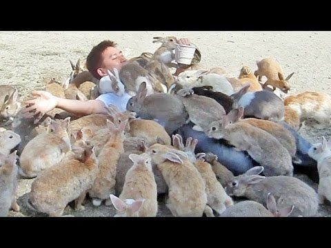 I want to go to Rabbit Island!!!
