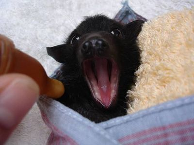 Bat's aren't scary, they're adorable.
