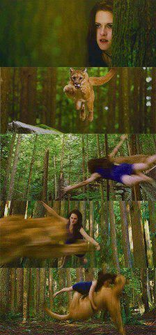 """Since Edward and Bella are """"vegeterian vampires"""",their fave animal to hunt is mountain lion"""