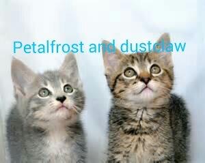 Goldensky Warrior Cats