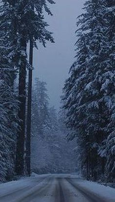WELL IT SNOWED THE LAST 2 DAYS HERE IN B.C. CANADA AND IT LOOKS LIKE THIS EH!