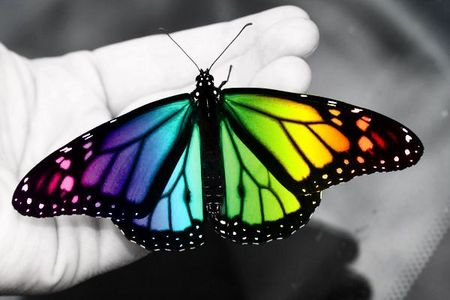 If I was a бабочка I would look like this. A colorful butterfly. :)