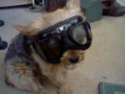 Pilot dog ready for takeoff!
