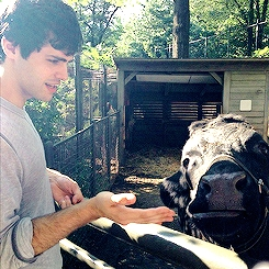 Matt loves his cows <3 (seriously. his Instagram is full of 'em)
