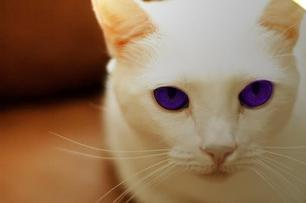 As my username says my name would be Poppyleaf and I would be a pure white kit.My clan would be Thunderclan and I would have Lavender purple eyes.(P.S I'm the first one to be invincible) EDIT:I would be Poppykit for my first 6 months then now I'm Poppyleaf as my warrior name but in reality I'm Poppypaw.How cute of a name like that?How would you like to be named both prefix and suffix starting with the same letter?