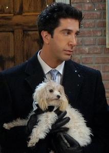 I like Ross but David isn't in my puncak, atas 10 hotties :)