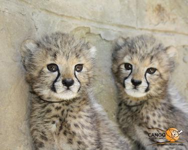 I have Mehr than one fave animal... dolphins cheetahs Pandas white tigers/lions Hunde Kätzchen