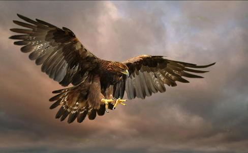 The Golden Eagle !!!!